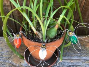 Small bulb with wire wings and ball bearings and becomes a cute, little bug. Great garden decor. Add a base and he can hang on any pot. He's fragile and is best not left in direct sunlight all day. Handmade in the USA.