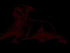 finished dog